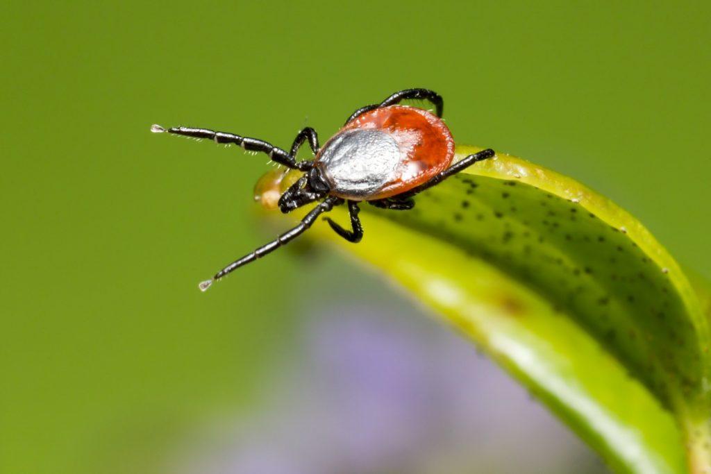 Beware of ticks, if you've been outdoors!